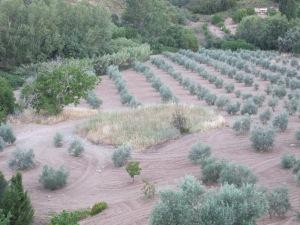 7 threshing patch 9-7-14