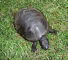 [photo: Wikipedia]