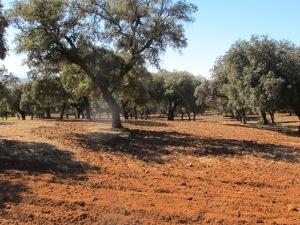 oak field2 10-10-14