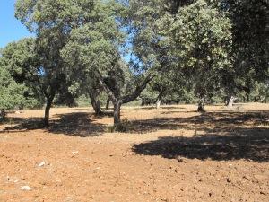 oak field3 10-10-14