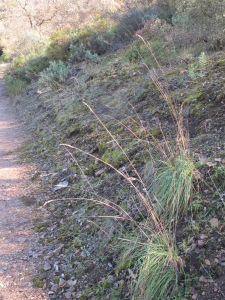 dead grass beside the track 28-1-15