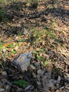 dead leaves underfoot 28-1-15