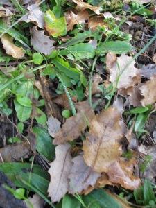 fresh green growth1 28-1-15