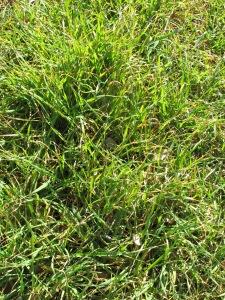 fresh green growth2 28-1-15