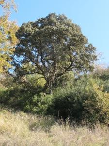 glorious tree 28-1-15