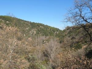 jose antonio's valley1 28-1-15