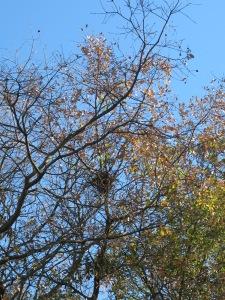 last year's bird nest 28-1-15