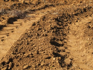 tractor prints in earth 10-10-14