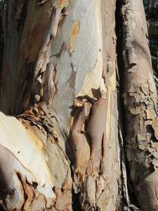 bark1 10-10-14