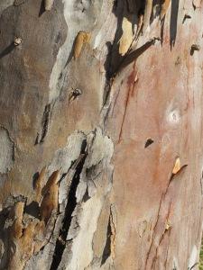 bark2 10-10-14
