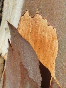 bark3 10-10-14