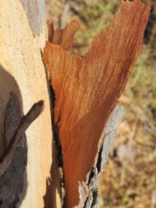 bark5 10-10-14