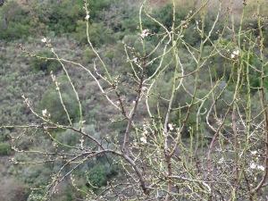 blossom2 9-2-15