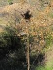 dried flowerhead3 28-1-15