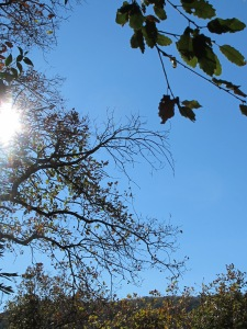 sunlight & holm oak 28-1-15