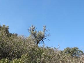tree on the horizon 11-2-15