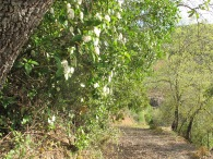 almond track 5-4-15