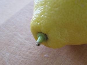 lemon 5-4-15
