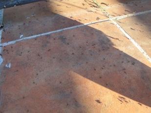 ants1 17-6-15