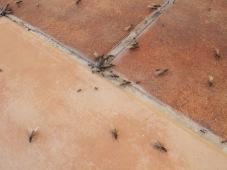 ants3 17-6-15