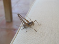 cicada1 26-8-14