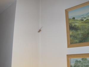 gecko1 28-7-15