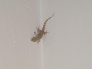 gecko2 28-7-15