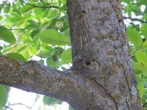 woodpecker holes2 1-7-15