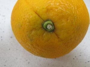 orange 19-12-15