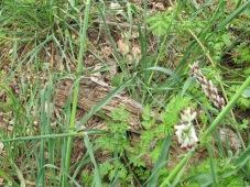 bark & new grass 14-4-15