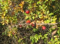 berries1 10-12-15