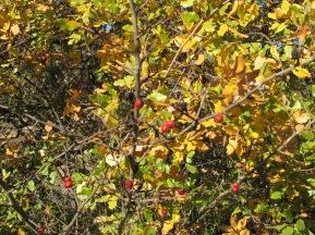 berries2 10-12-15