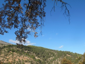 blue sky & hillside 10-12-15
