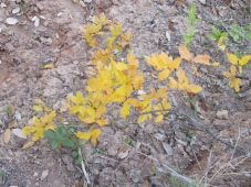 dried track & golden branch 10-12-15