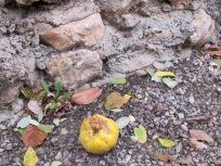 fallen fruit 15-12-15
