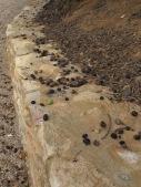 fallen olives 9-12-15