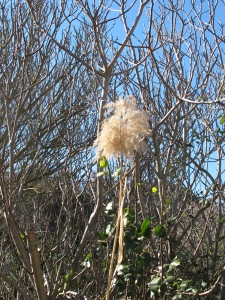 fig branches and the plume of a reed 28-1-15