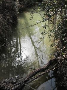 from juan's bridge, looking upstream 11-2-15