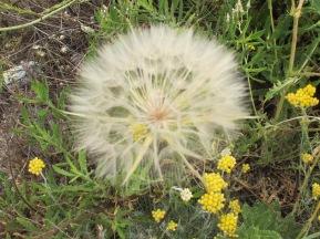 large seedhead 20-5-15