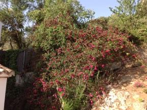 roses - photo David 14-5-2012 (2)
