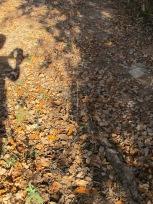 shadows & leaves 10-12-15