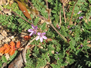 tiny violet wildflowers 28-1-15
