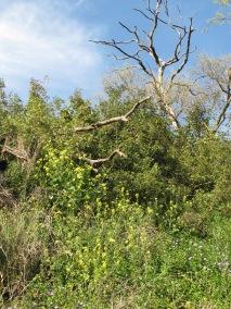 trees & blue sky1 5-4-15