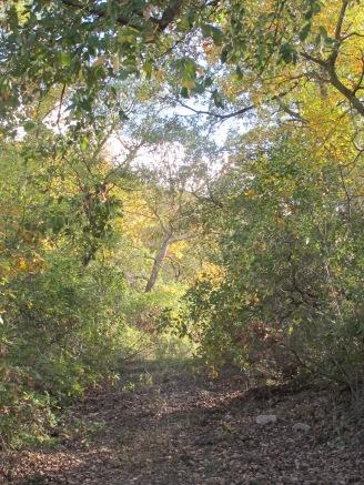 wild shrubs 10-12-15