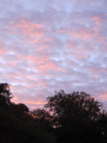 winter sunrise8 8-12-15