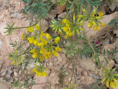 yellow - identify 14-4-15