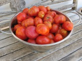 bowl of tomatoes 23-9-15
