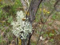lichen2 14-4-15