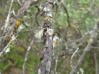lichen3 14-4-15