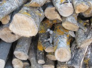 newly cut logs on logpile 23-9-15